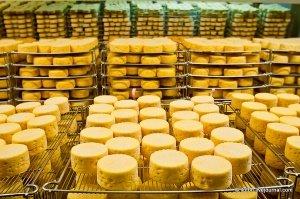 Объемы выпуска сыра растут, но качество заметно снижается