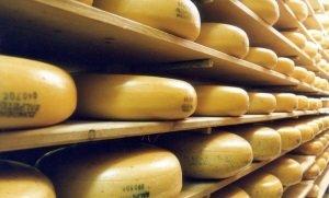 Производство российского сыра в 2015 году выросло на 17,6%